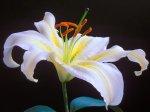 lili flower.jpeg