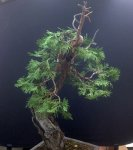 incense cedar first styling.jpg