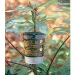 rooter-pot-tree-500.jpg
