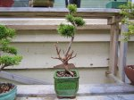 potted 006 (640x480).jpg
