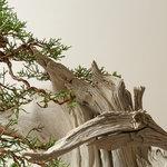 Ben Oki Juniper Studio Detail-04.jpg