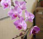 office orchid.jpg