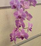 purple orchid 2020.jpg