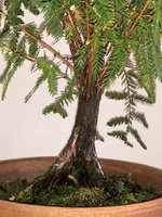 Tree Front.jpg