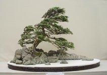 Windswept_bonsai_tree.jpg