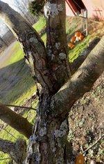 upper branch 1.jpg