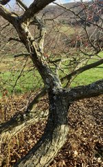 branch 2.jpg