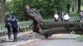 central-park-tree-fall-03-ap-jef-170815_16x9_992.jpg