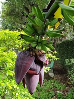 Banana-1024x1365.jpg