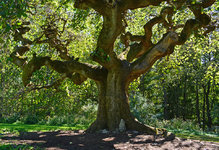 in-the-shade-of-the-elm-tree-120.jpg
