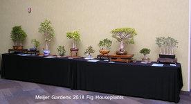 Meijer Gardens 2018 Houseplants.JPG