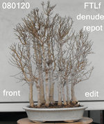 FTLf 2020_0801 F Denude Repot Edit.JPG