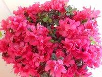 ruby red flowers.jpg