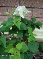 BID #2 100621 flowers.JPG