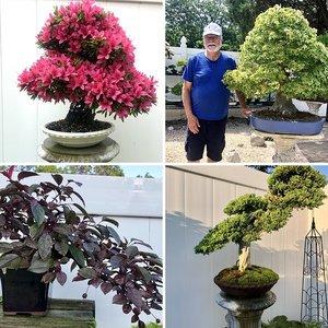 Gary's bonsai collection