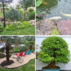 My bonsai collection and koi pond