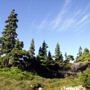 Trees in Nature - Vancouver Island Canada