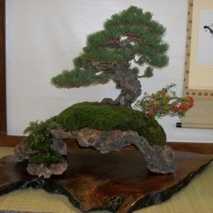 Midori Bonsai Show In San Jose