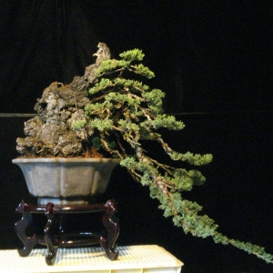 repotted cascade with stone