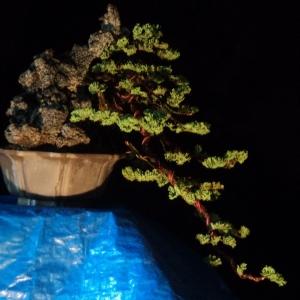 again, update.  juniper cascade with stone