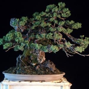 juniper root over rock update