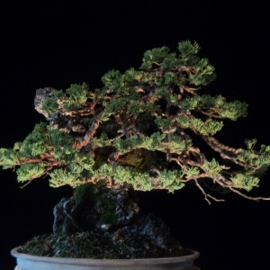 again.  root over rock juniper update