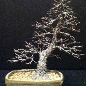 Metal bonsai sculpture