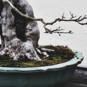 Voss-bonsai01