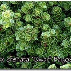 DwarfPagoda