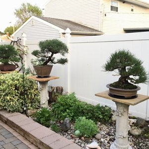 Bonsai collection